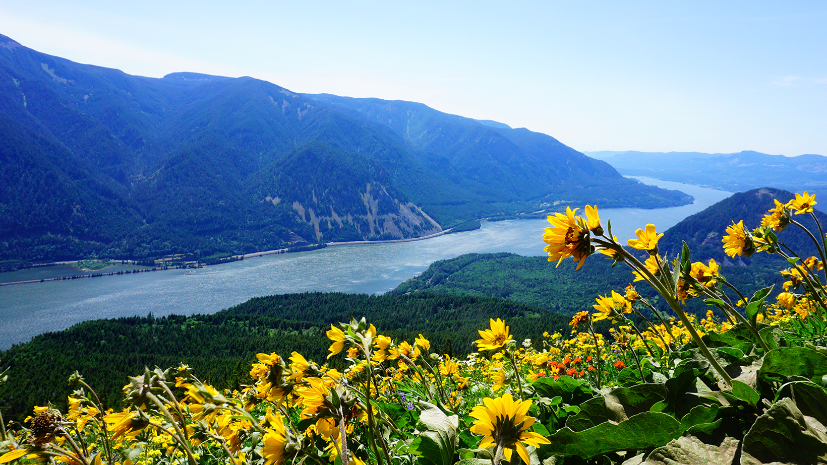 View of the Columbia River winding through the Gorge from the top of Dog Mountain in full spring bloom