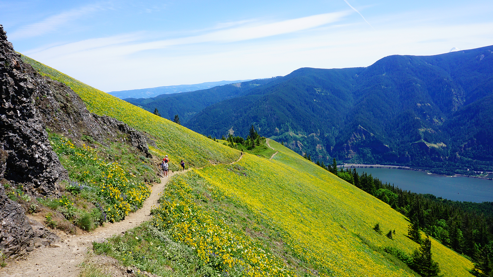 Luscious green slopes of Dog Mountain in full spring bloom with yellow sunflowers and an awesome view of the Gorge